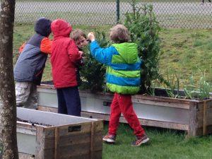 Little farmers observing...